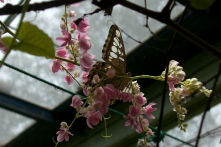 Schmetterling - Haus - Phuket Butterfly Garden & Insect World