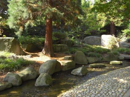 japanischer garten im park bild parkanlage planten un. Black Bedroom Furniture Sets. Home Design Ideas