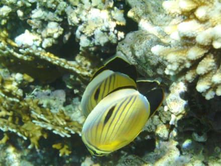 Eindrücke der Unterwasserwelt... - Tauchen Sharm el Sheikh
