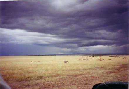 der Regen kommt gleich - Masai Mara Safari
