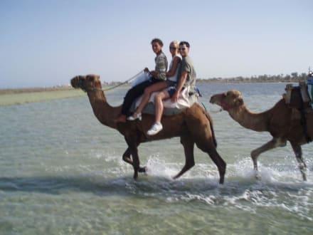 Kamelreiten ... - Kamelreiten Midoun