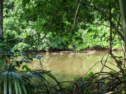 Blick aus der Hütte - Orinoco Delta