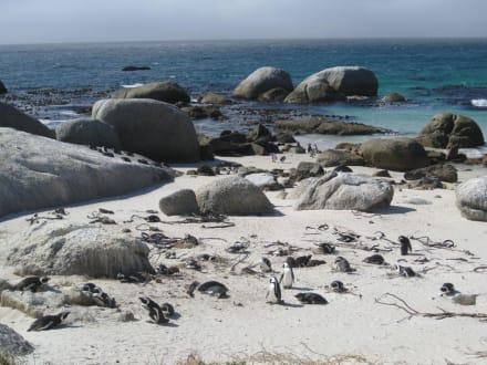 Pinguin Kolonie - Boulders Beach