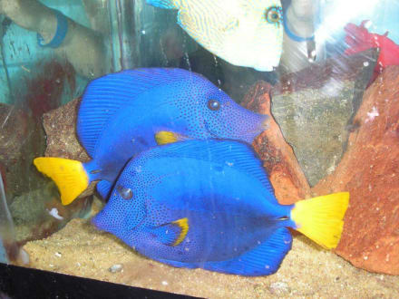 Schönes Paar - Aquarium