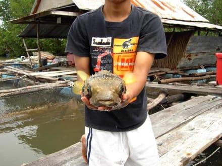 Eine der Fischfarmen - Bootstour ab Krabi-Hafen