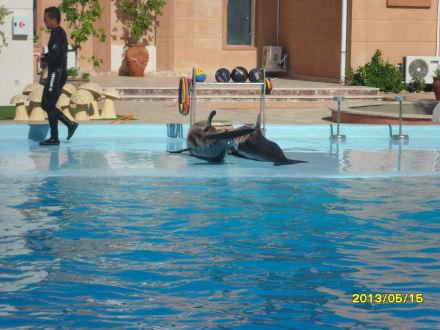 Freizeitpark - Delfinarium Dolphinella Sharm el Sheikh