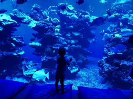 Fischaquarium - Palma Aquarium