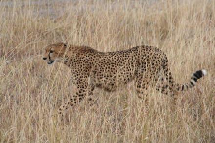 der Einzelgänger - Masai Mara Safari