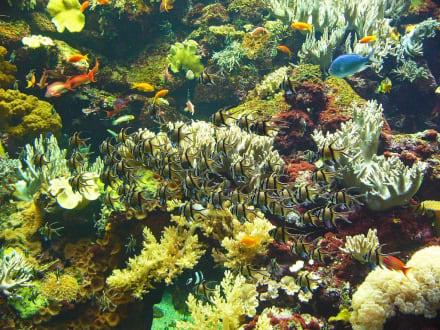Korallen - Fische - Loro Parque