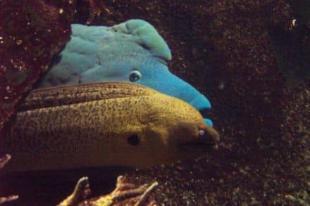 Ein ungleiches Pärchen - Melbourne Aquarium