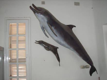 Delphin mit Baby - Aquarium