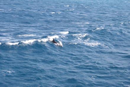 Delfin - Ausflug mit Mohamed