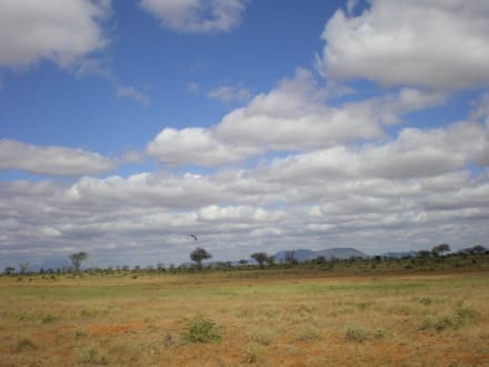 Tsavo - Tsavo West Nationalpark