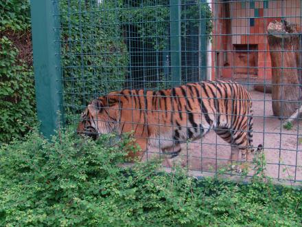 Tierrätzel - Tierpark Friedrichsfelde