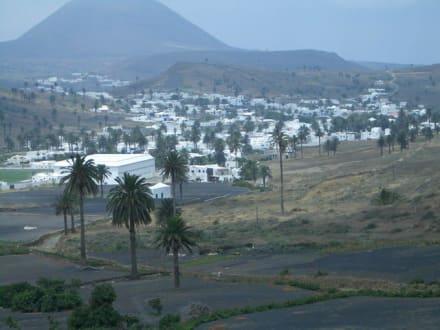 Tal der 1000 Palmen - Tal der tausend Palmen