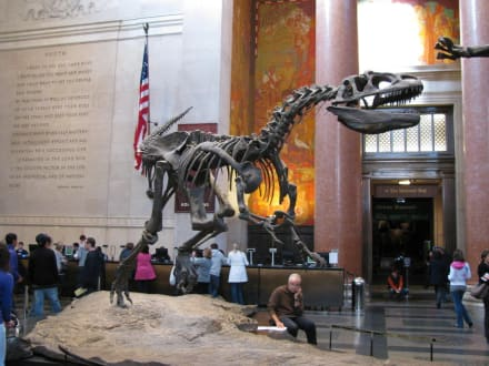 Nachts im Museum  - Museum of Natural History