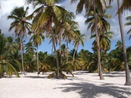 Unbewohntes Land im Paradies - Isla Saona