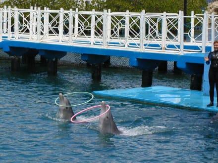 Delphinshow - Delphinarium Playa Esmeralda
