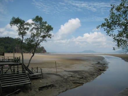Mangroven bei Ebbe - Bako Nationalpark