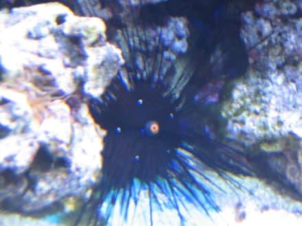Unterwasseraquarium Insel Fehmarn - Aquarium Burg