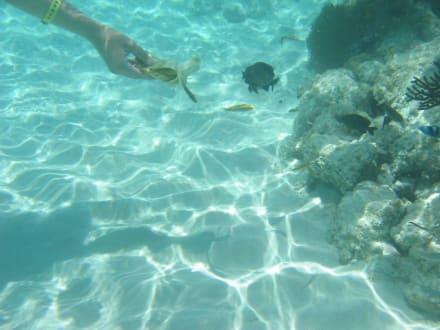 Fische mit Banane angefüttert - Punta Cana