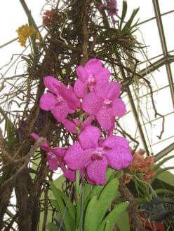 Orchideenschau - Keukenhof