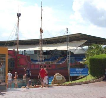 Zoo-Marine - Matitimer Zoo Zoomarine