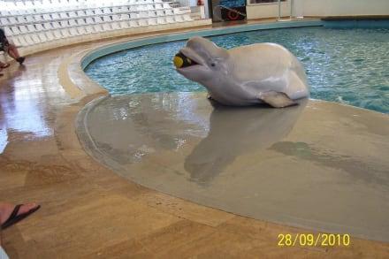 Freizeitpark - Delfinarium Belek