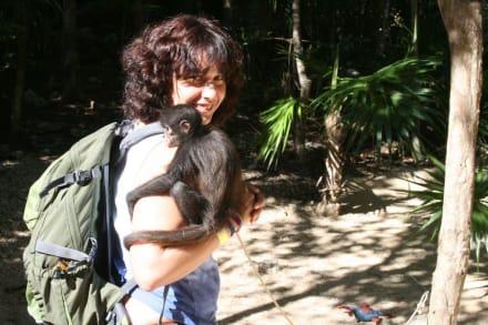 Schmusen mit kleinen Affen - Aktun-Chen