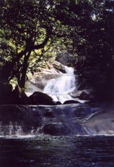 Wasserfall - Wooroonooran National Park