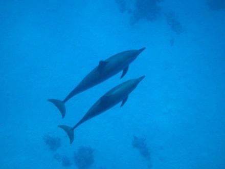 Delfine - Dolphin House