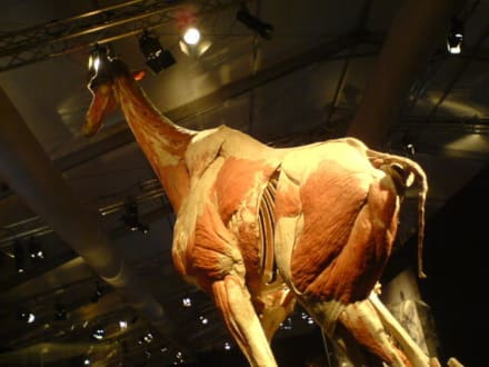 korperwelten der tiere die anatomie