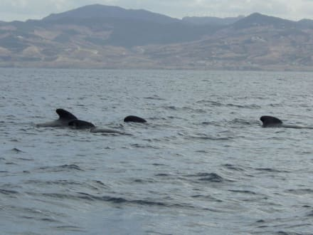 Whale Watching - Whale Watching Tarifa