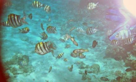 Fische vor Little Magawish Island - Schnorcheln Magawish Riff Hurghada