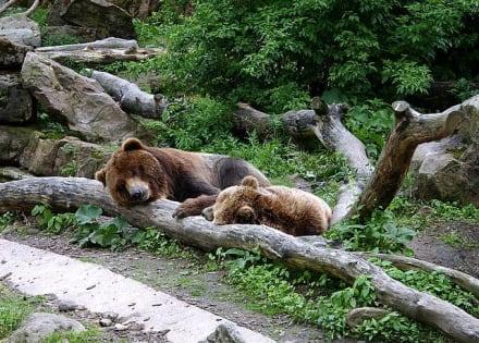 Grislybären  im Zoo Decin - Zoo Decin