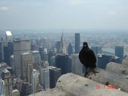 New York aus der Vogelperspektive - wie wahr! - Empire State Building
