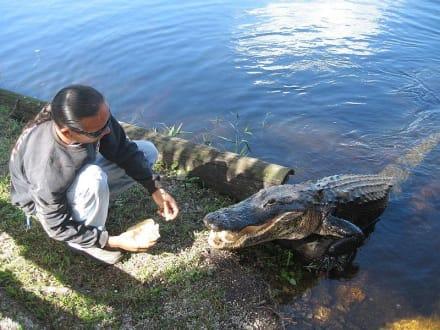 Reptiles - Buffalo Tiger's Florida Everglades Airboat Rides