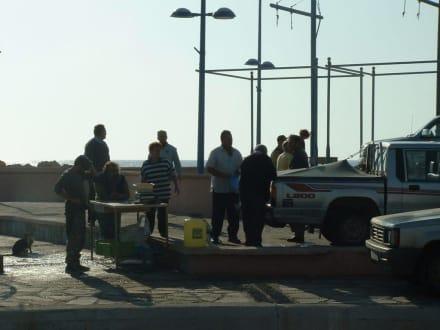 Der Fischverkauf - Fischereihafen Ayia Napa/Agia Napa