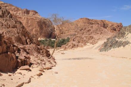 Oase am Ende der Schlucht - White Canyon