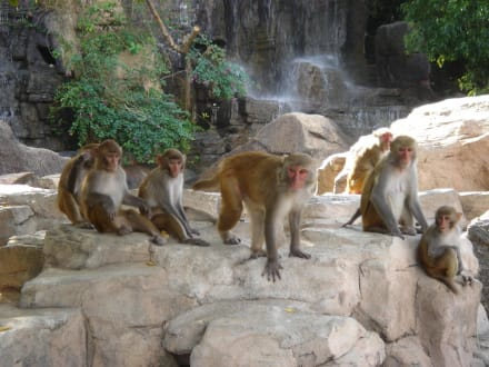 Naturreservat/Zoo - Affeninsel