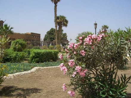 Oleander - Moschee Sultan Hassan