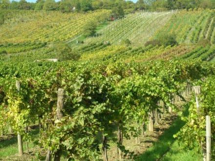 Blick auf die Weinfelder - Neustifter Weingärten