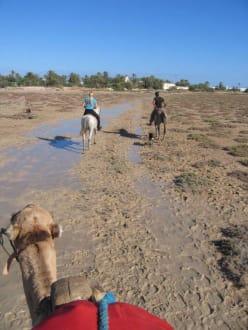 Kamel, Pferd und Hund beim Ausritt in der Lagune - Ranch Djerba Caravane