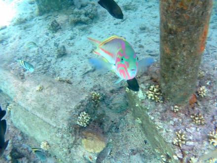 Schnorcheln in der Lagune - Schnorcheln Nabq Bay