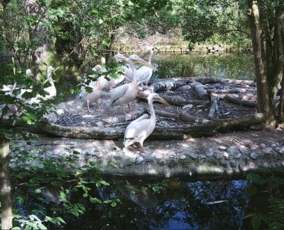 Tierpark Hellabrunn - Tierpark Hellabrunn