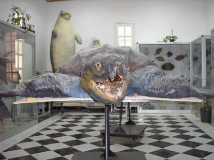 Merrschildkröte - Aquarium
