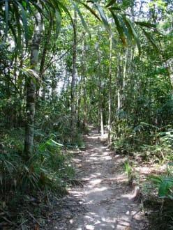 Dschungel in Canaima - Wasserfälle von Canaima - Salto Sapo