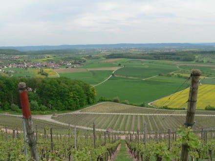 Weinberg in der Region - Zabergäus und Stromberg-Heuchelberg