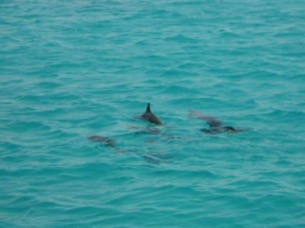 Delphine - Schnorcheln Hurghada