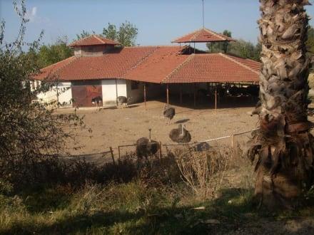 Auf dem Bauernhof - Toni's Ausflüge